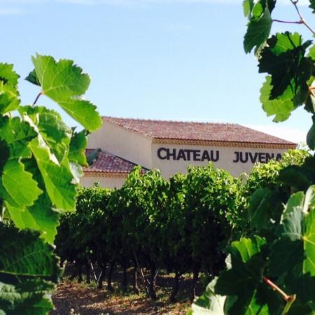Caveau vu des vignes